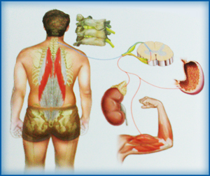 NST equilibrio del corpo